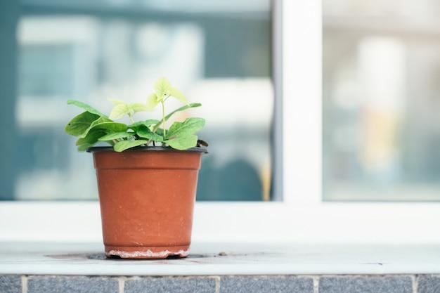 A planta em vaso do lado de fora do prédio. Foto Premium
