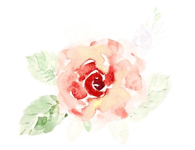 A rosa bonito da laranja floresce a aguarela pintado à mão no branco. Foto Premium