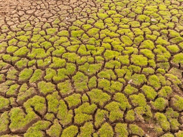 A terra com terra seca e grama cobriu o aquecimento global Foto Premium