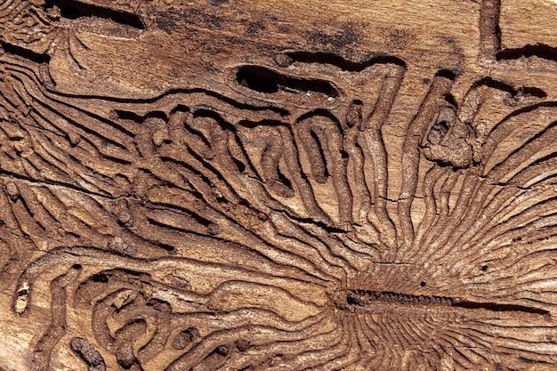 A textura da superfície interna da casca de pinus danificada por pragas de insetos Foto Premium