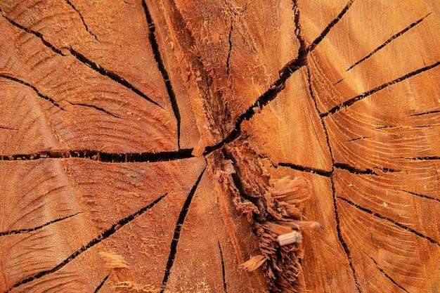 A textura de fundo da árvore cortada Foto Premium