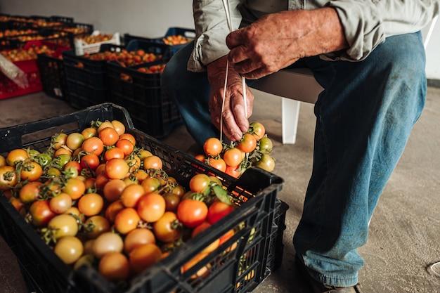A velha tradição de pendurar tomates cereja na parede para preservá-los Foto Premium