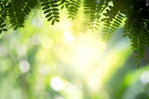 A vista bonita do close up da folha verde da natureza nas hortaliças borrou o fundo com espaço da luz solar e da cópia. é usado para o fundo de verão ecologia natural e o conceito de papel de parede fresco. Foto Premium