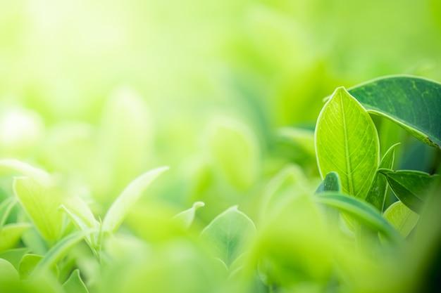 A vista bonita do close up do verde da natureza sae no fundo borrado da árvore das hortaliças com o parque do jardim da luz solar em público. é ecologia da paisagem e copia o espaço para papel de parede e pano de fundo. Foto Premium