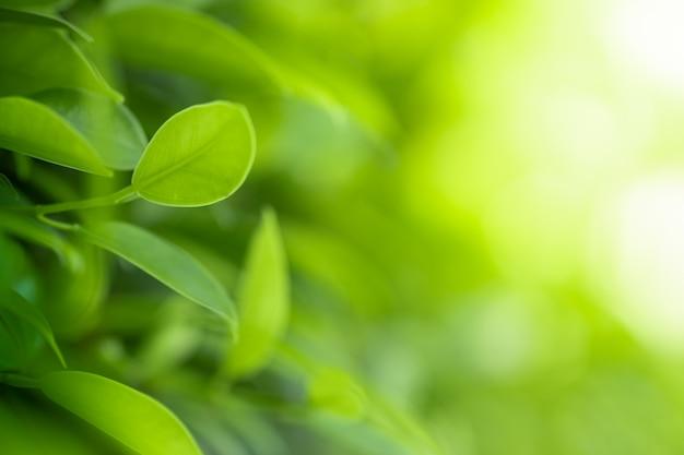 A vista bonita do close up do verde da natureza sae no fundo borrado da árvore das hortaliças com o parque do jardim da luz solar em público. Foto Premium