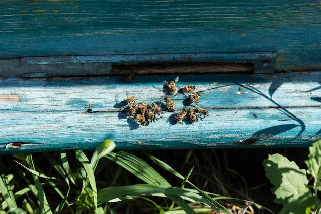 Abelhas close-up fora da colméia na fazenda Foto gratuita