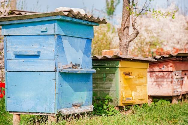 Abelhas em uma colméia de madeira velha em um jardim de fazenda. . Foto Premium