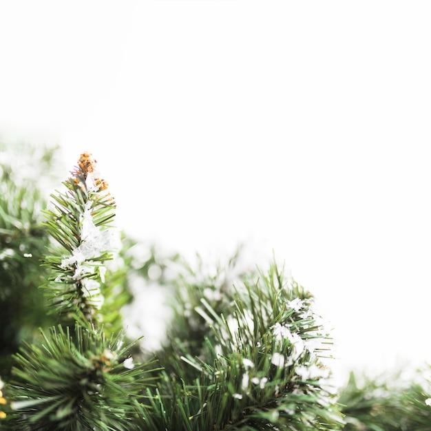 Abeto com flocos de neve em galhos Foto gratuita