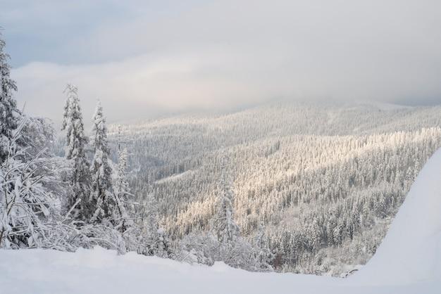 Abetos cobertos de neve do inverno nas montanhas no céu azul com sol Foto Premium