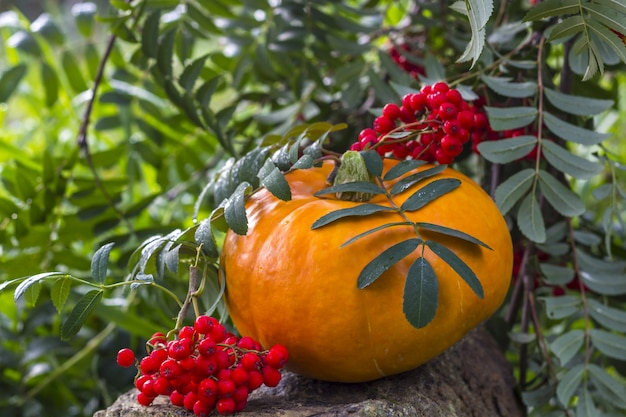 Abóbora da colheita do outono com bagas de rowan ao ar livre. Foto Premium