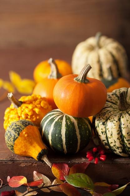 Abóboras decorativas e folhas de outono para o halloween Foto Premium