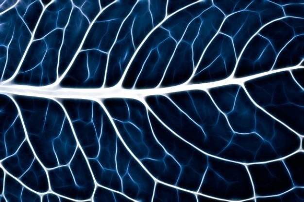 Abstrato folha macro azul Foto gratuita
