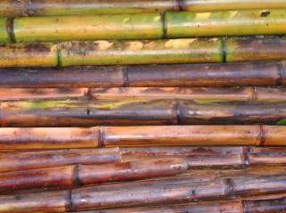Acabada de cortar varas de bambu Foto gratuita
