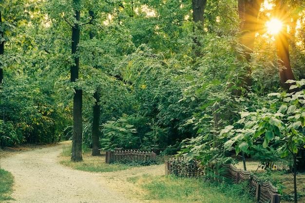 Acesso estrada de cascalho entre as altas árvores verdes exuberantes ao pôr do sol Foto Premium