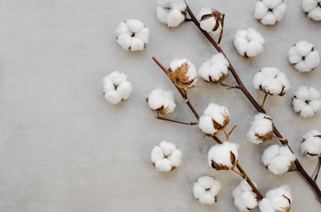 Acima, vista algodão flores sobre fundo de estuque Foto gratuita