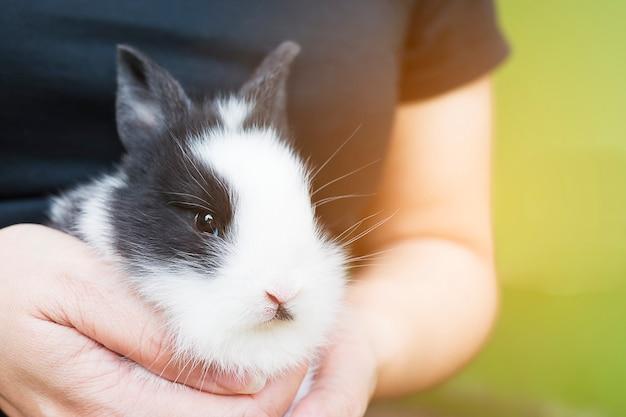 Adorável bebê 2 semanas coelho tailandês na mão da senhora Foto gratuita