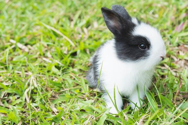 Adorável bebê 2 semanas coelho tailandês Foto gratuita