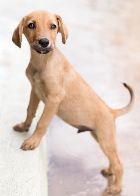 Adorável cachorro no abrigo posando no degrau Foto gratuita