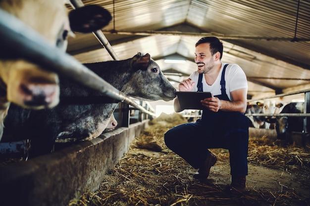 Agricultor caucasiano bonito em geral agachado ao lado de bezerro, usando o tablet e sorrindo. interior estável. Foto Premium
