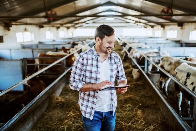 Agricultor caucasiano bonito na camisa xadrez e calça jeans usando tablet e olhando para bezerros em pé no estábulo. Foto Premium