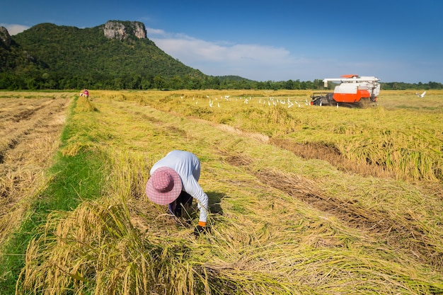 Agricultor, colheita, combinar, harvester Foto Premium