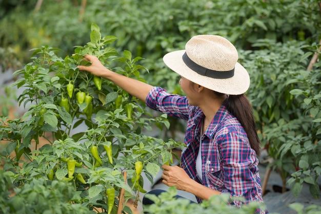 Agricultor de mulher envelhecido médio, com pimentão orgânico na mão Foto gratuita