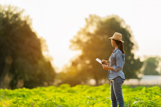 Agricultor está planejando cultivar em comprimidos. Foto Premium