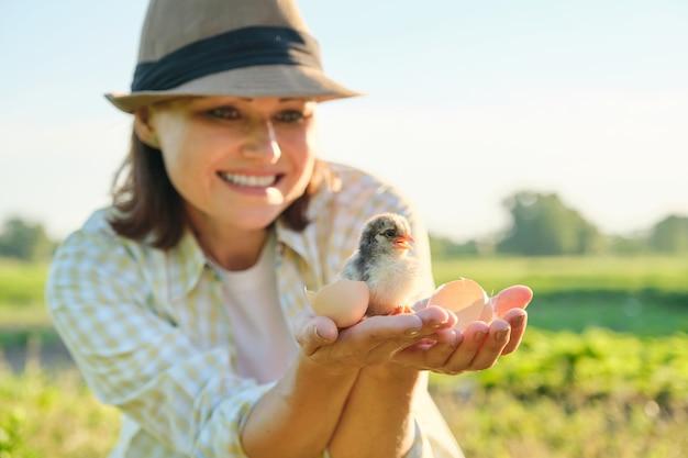 Agricultor maduro segurando um pintinho recém-nascido na mão Foto Premium