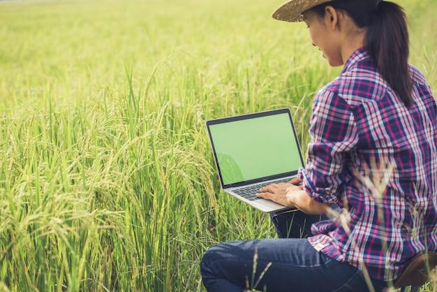 Agricultor no campo de arroz com laptop Foto gratuita