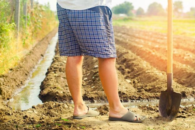 Agricultor rega culturas agrícolas, campo, irrigação, rega natural. agricultura. Foto Premium