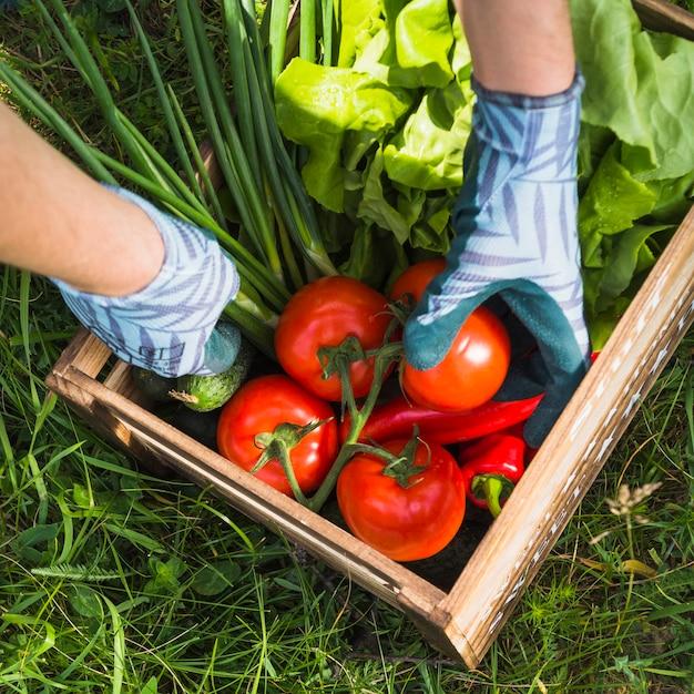 Agricultor segurando a caixa com legumes orgânicos frescos Foto gratuita