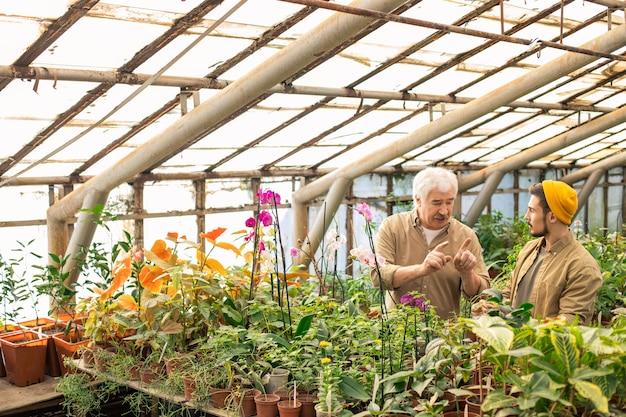 Agricultor sênior gesticulando com as mãos enquanto dá conselhos sobre o plantio para jovem trabalhador em estufa Foto Premium