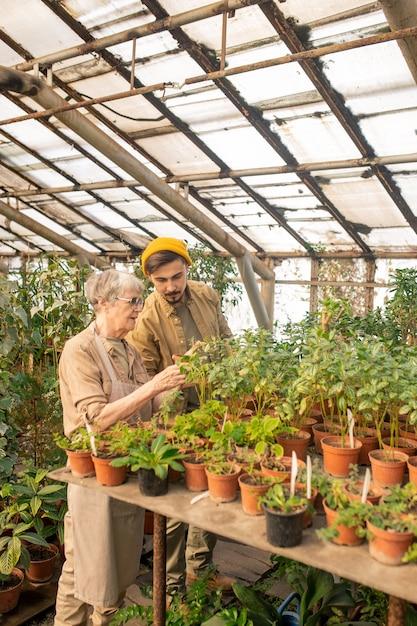 Agricultor sênior verificando insetos nas folhas das plantas junto com o jovem assistente na estufa Foto Premium