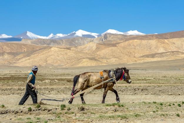 Agricultor tibetano arar pelo cavalo de tração nas terras agrícolas no tibete Foto Premium