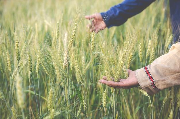 Agricultores colhem cevada alegremente. Foto gratuita