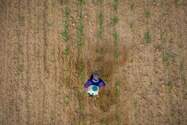 Agricultores estão injetando milho em terra seca no nordeste da tailândia Foto Premium