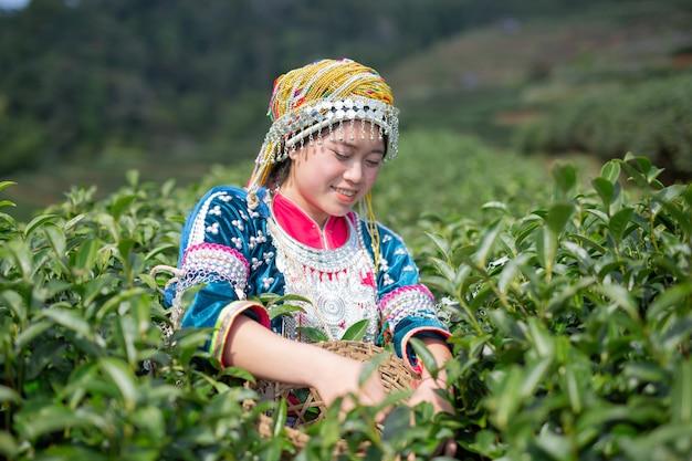 Agricultura de mulheres de hilltribe Foto gratuita