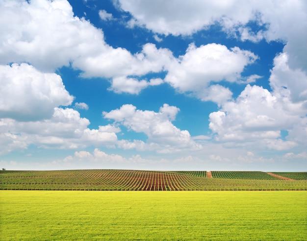 Agricultura e vinha vinha Foto Premium