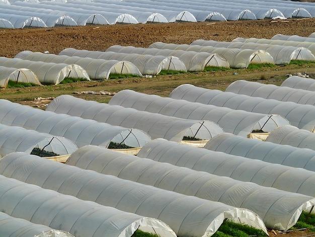 Agricultura o cultivo em estufas berçário Foto gratuita