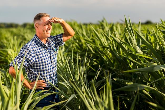 Agrônomo sênior, olhando para longe em um milharal Foto gratuita