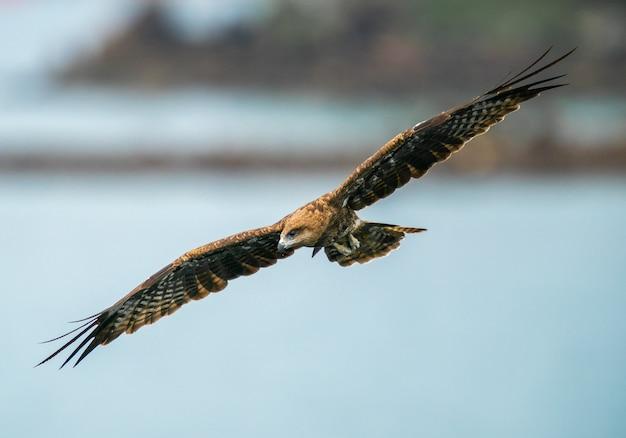 Águia abrindo suas asas Foto gratuita