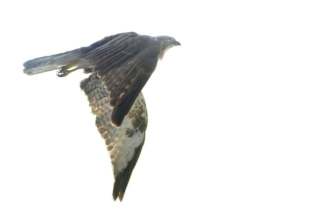 Águia do vôo Foto gratuita