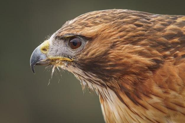 Águia na natureza Foto gratuita