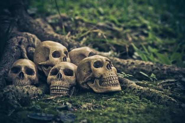 Ainda vida com crânio humano nas raízes Foto Premium