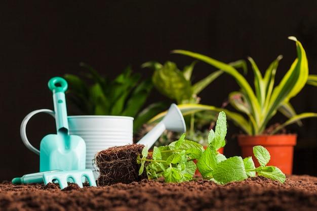 Ainda vida de várias plantas no solo Foto gratuita