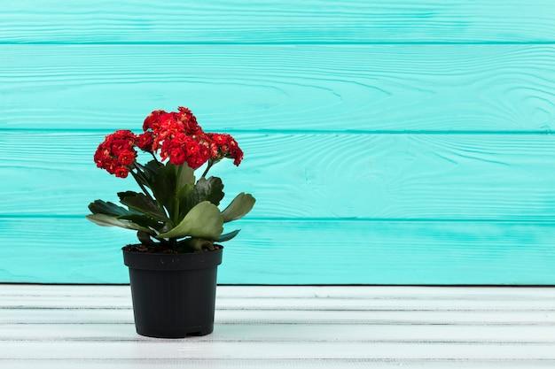 Ainda vida floral bonita Foto gratuita