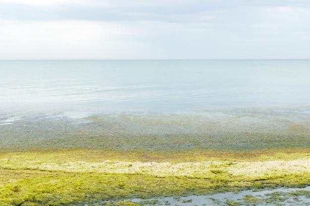 Alga na maré baixa na praia em um dia chuvoso cinzento. conceito de ecologia e desastres naturais Foto Premium