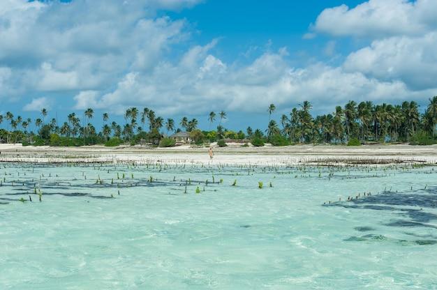 Algas fazenda no oceano Foto Premium
