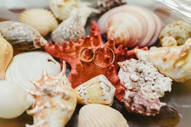 Alianças de casamento cercadas por seashells, moldadas no tema marítimo. Foto Premium