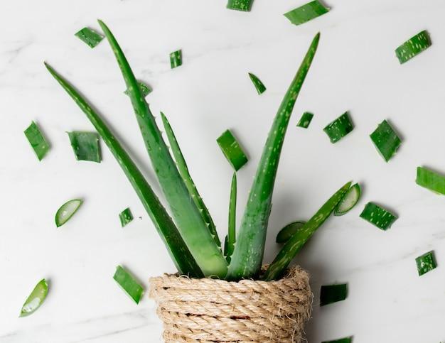 Aloe em panela e cortes Foto Premium